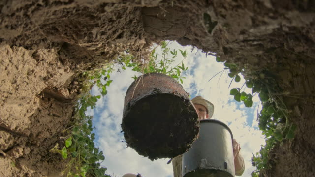 ms man planting fruit tree into hole in ground - directly below stock videos & royalty-free footage