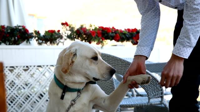 stockvideo's en b-roll-footage met man play with dog - alleen één mid volwassen man