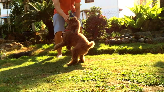 Man play with poodle dog