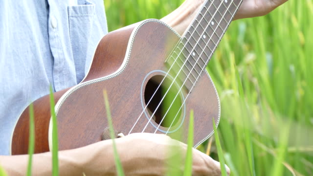 Man playing partners guitar-ukulele in rice field