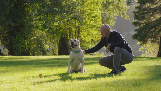 man playing with his dog in a park - obedience stock videos & royalty-free footage