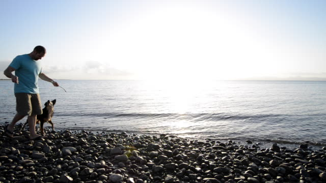 man plays with dogs during sunset at beach - rock stock videos & royalty-free footage