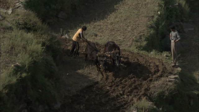 Man ploughs terrace with oxen, Okhimath, India Available in HD.