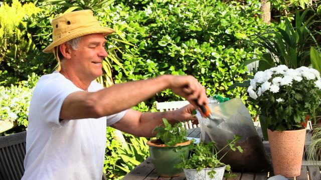 man potting plants in the garden / cape town, western cape, south africa - only mature men stock videos & royalty-free footage