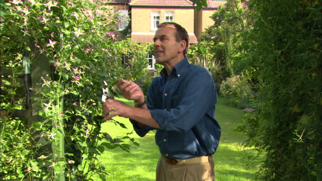 mws man pruning plant - secateurs stock videos & royalty-free footage
