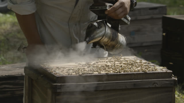 vídeos de stock e filmes b-roll de man puffs smoke at hive, japan. - grupo mediano de animales