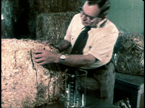 1980 Man pulls apart bale of grain and places some in beaker / USA