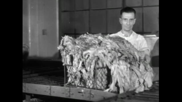 stockvideo's en b-roll-footage met man pushes dried tobacco leaves into steam oven; 1951 - mid volwassen mannen