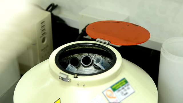 man putting sample into centrifuge - animal blood stock videos and b-roll footage