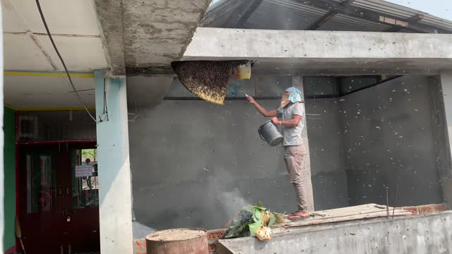 man removing a large wild beehive from the roof of a suburban home on march 18, 2021 in bajali, india. bees are critical to the ecosystem, and... - uncultivated stock videos & royalty-free footage