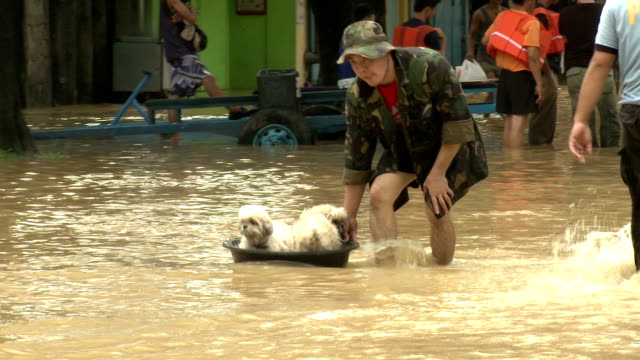 vídeos de stock, filmes e b-roll de man rescues dogs from flood waters manila - vadear