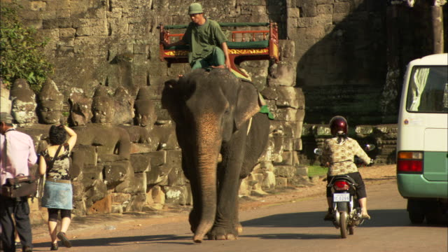 a man rides an elephant outside the angkor wat temple complex in cambodia. - elephant stock videos & royalty-free footage
