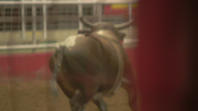 man rides and falls off bull, bull charges man watching behind gate - rodeo stock videos & royalty-free footage