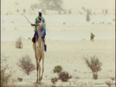 stockvideo's en b-roll-footage met man rides camel in sahara desert, niger - werkdier