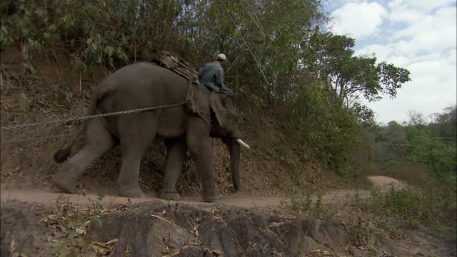 ws la man riding atop elephant hauling log along dirt road, thailand - 引く点の映像素材/bロール