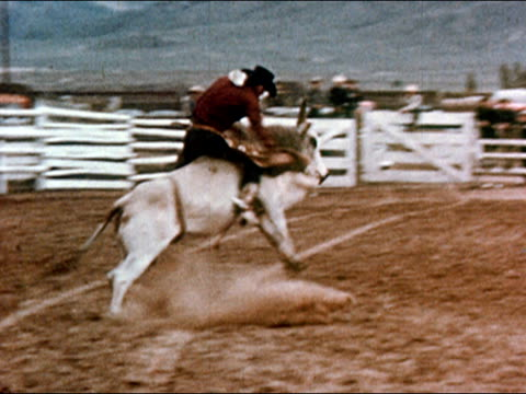 1950 man riding bucking bull in rodeo / falling off bull / gunnison, colorado / audio - gunnison stock videos & royalty-free footage