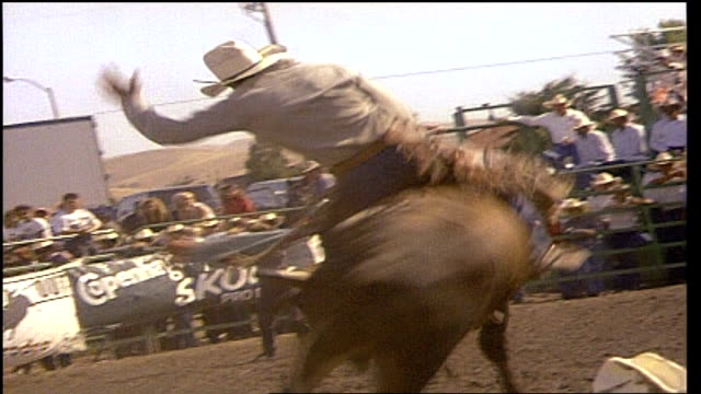 man riding bull falling off and being rammed by bull - bucking stock videos & royalty-free footage