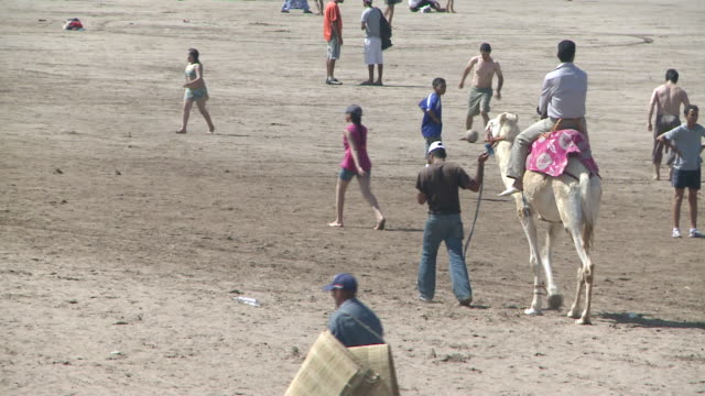 ms pov man riding  camel on beach  / ei jadida, unspecified, morocco - arbeitstier stock-videos und b-roll-filmmaterial