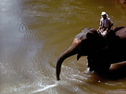 1939 ha ws man riding elephant in water as elephant blows water from trunk/ sri lanka  - spraying stock videos & royalty-free footage