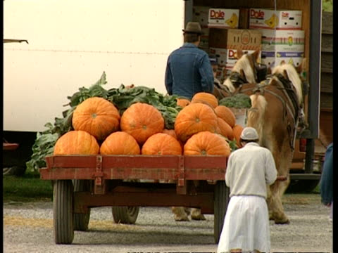 MS Man riding horse and cart away from camera, carrying pumpkins and other vegetables to market