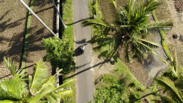 TS: Man riding motor scooter through palm trees