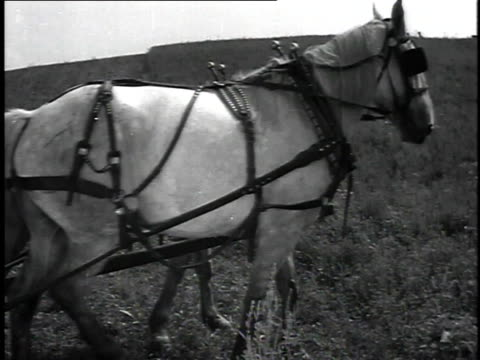 vídeos de stock, filmes e b-roll de 1923 ms man riding on farming vehicle being pulled through field by horses / united states - 1923