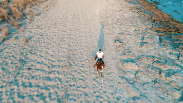 vídeos de stock e filmes b-roll de man riding on horse on the beach over sunset - cavalgar