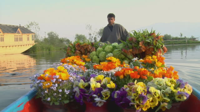 ms, man rowing boat full of flowers at dal lake, srinagar, jammu and kashmir, india - only mature men stock videos & royalty-free footage