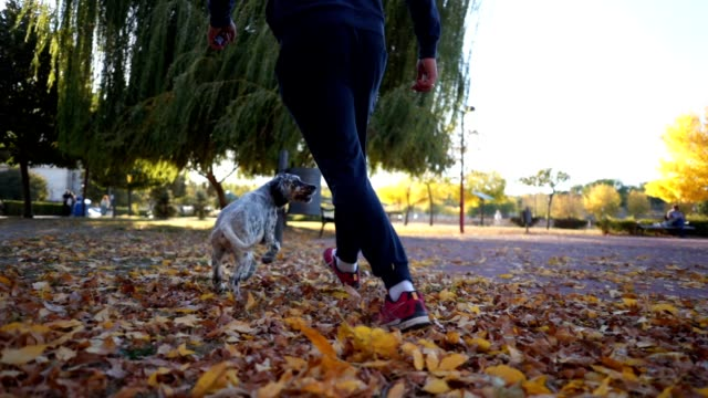 man running and playing with his dog in a park - pet owner stock videos & royalty-free footage