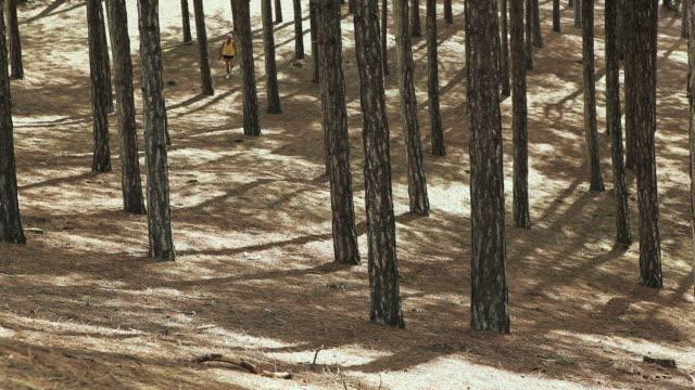 stockvideo's en b-roll-footage met ws man running in fir woods / corsept, loire-atlantique, france - alleen één seniore man