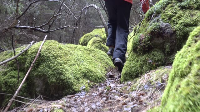 vidéos et rushes de man running in the forest of pine in between stones covered of moss - pinacée