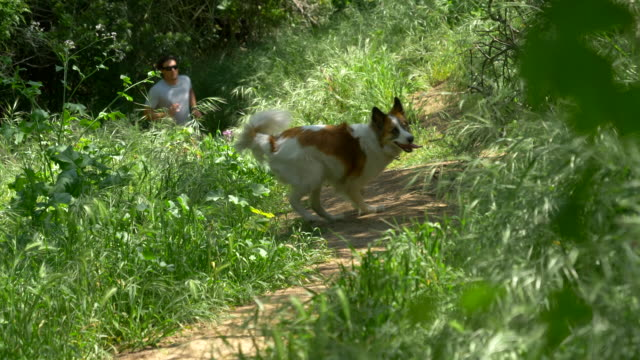 a man running with his dogs on a trail. - slow motion - palos verdes stock videos & royalty-free footage