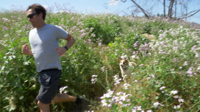 a man running with his dogs on a trail. - palos verdes stock videos & royalty-free footage