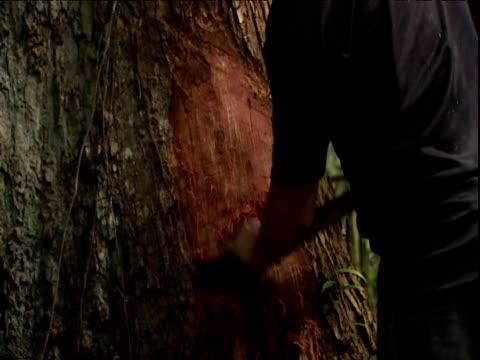 vídeos y material grabado en eventos de stock de man scrapes bark from large tree with machete amazon rainforest venezuela - región del amazonas