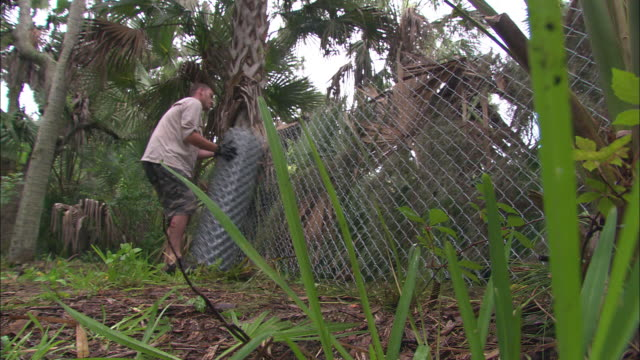 a man sets up a chain-link fence in a lush forest. - chainlink fence stock videos and b-roll footage