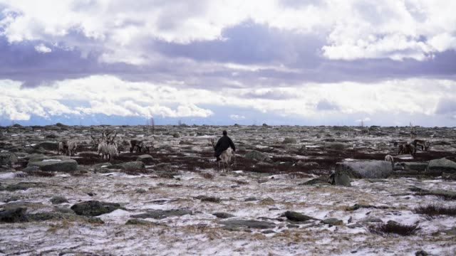 man shepherding reindeers  in mongolia in winter - independent mongolia stock videos & royalty-free footage