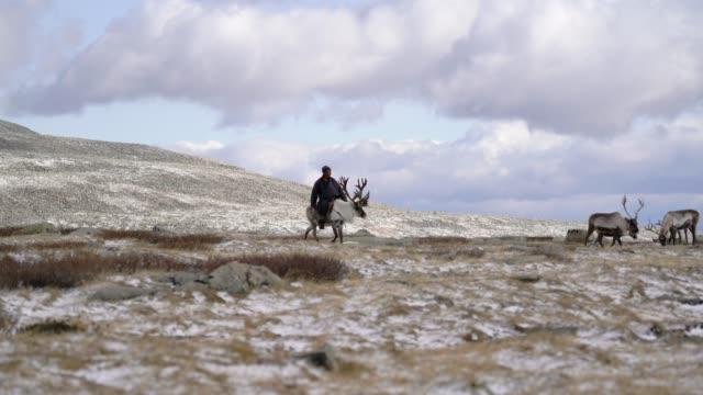 vidéos et rushes de homme guidant des rennes en mongolie en hiver - mongolie indépendante