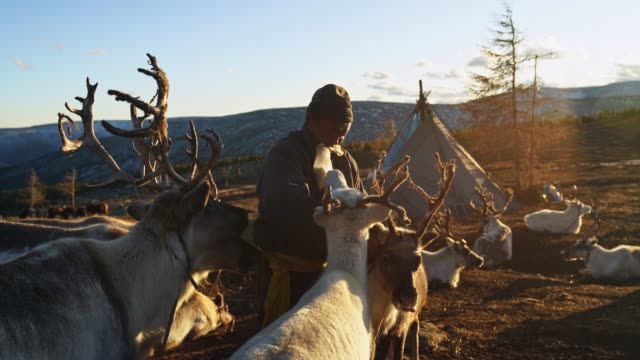 man shepherding reindeers  in mongolia - independent mongolia stock videos & royalty-free footage