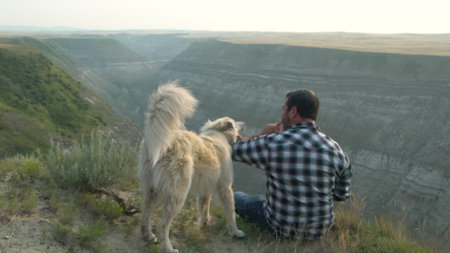 man sits with dog overlooking canyon - finding stock videos & royalty-free footage