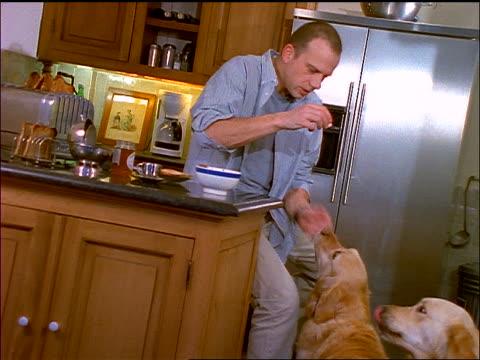 Man sitting at kitchen counter + feeding yellow retrievers