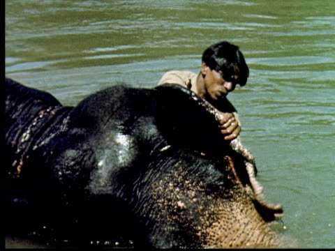 1960 montage man sitting on elephant in river. elephant splashes him with water from trunk. man washes elephant. elephant moving logs and building dam on river. elephant walks into camera / india - log stock videos & royalty-free footage