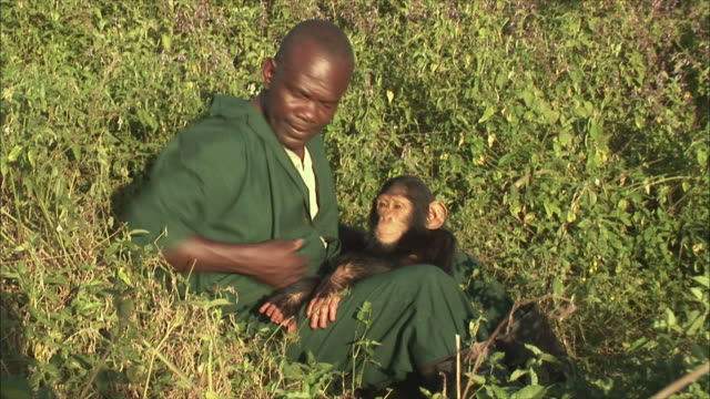 stockvideo's en b-roll-footage met ms pan man sitting with chimpanzee in forest / ngamba chimp sanctuary, ngamba island, uganda - alleen één mid volwassen man