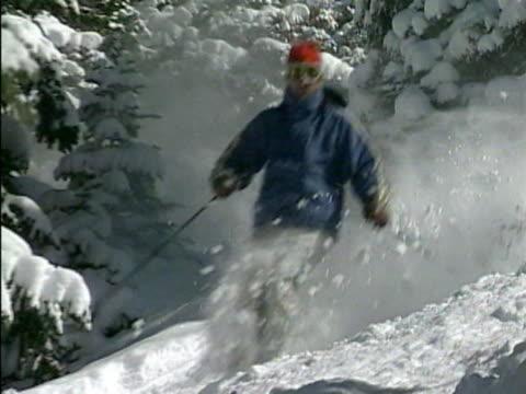 vídeos de stock e filmes b-roll de ws man skiing through pine forest / colorado, usa  - bastão de esqui