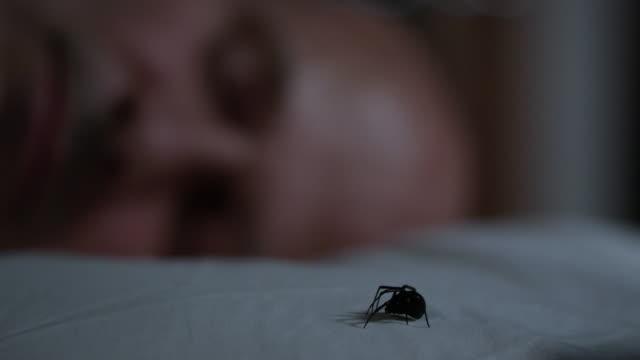 man sleeps as black widow spider crawls across his pillow - arachnophobia stock videos and b-roll footage