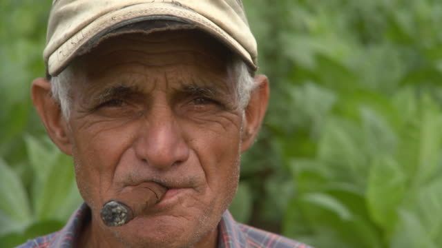 CU Man smoking in tobacco field / San Luis, Pinar del Rio, Cuba