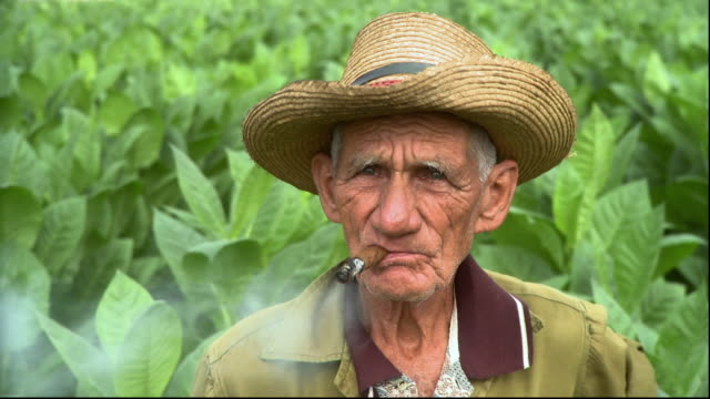 cu man smoking in tobacco field / san luis, pinar del rio, cuba - sigaro video stock e b–roll