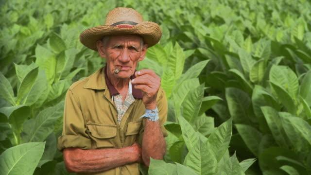 ms pan man smoking in tobacco field / san luis, pinar del rio, cuba - cuban culture stock videos & royalty-free footage