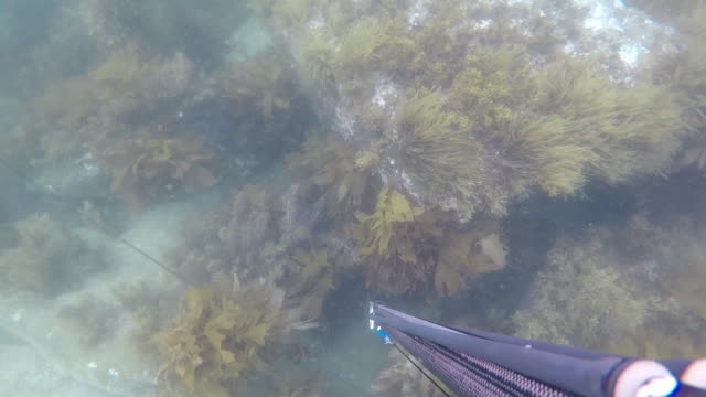 a man snorkelling with harpoon - seabed stock videos & royalty-free footage