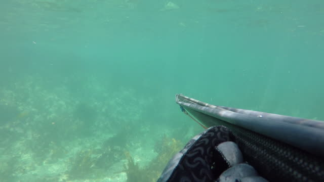 a man snorkelling with harpoon - arpone video stock e b–roll