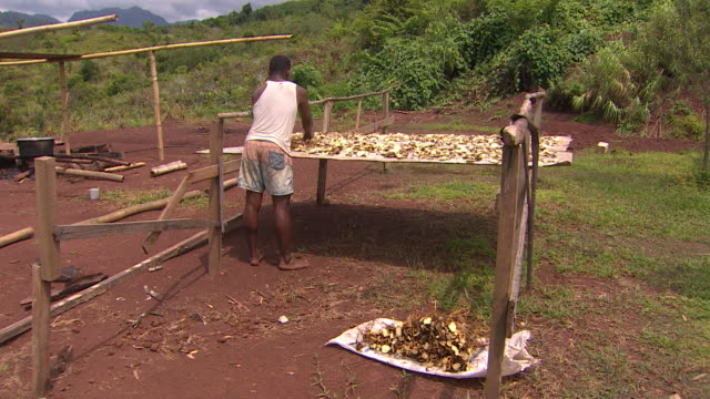 Man sorting kava root on table made of corrugated iron in village of Vunidogoloa Fiji